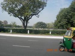 Delhi_cricket