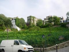 Vine_yard